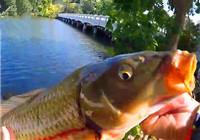 《垂钓对象鱼视频》 美女桥上作钓钓到巨鲤