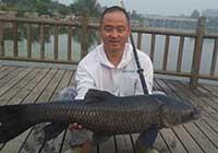 作釣徐州順堤河,擒獲21斤野生大青魚