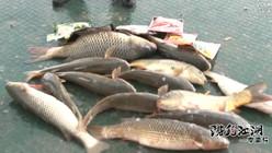 《游钓江湖》第二季 第16集 天津鸭淀钓获鲤鱼梭鱼