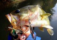 《宝岛渔很大》 20150704 七股路亚池猎鲈初体验
