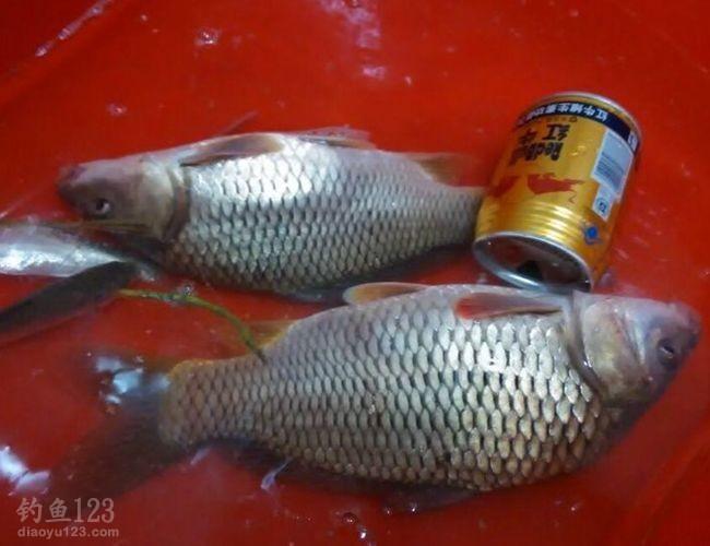 既然确定有大鱼,那我是一定要挑战一下的