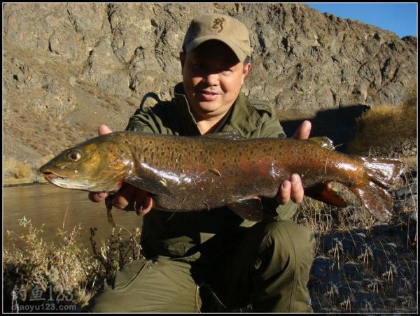 细鳞鲑,蒙古当地称之为(林诺克)