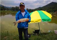 夏季在广东黑坑组队爆连大草鱼和鲮鱼
