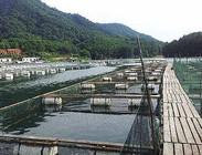 淡水船钓和筏钓的钓技特点
