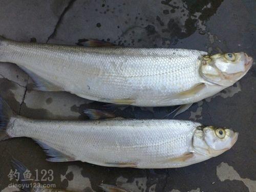分享路亚大翘嘴鱼的经验