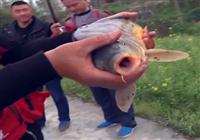 《水库钓鱼视频》钓鱼大师看漂抓口遛鱼视频合辑(6)