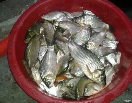 天气在热  也挡不住钓鱼人的热情    野沟鲫鱼爆拉 蚯蚓饵料钓鲶鱼