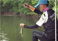 《钓技研》第8集 九曲劲水库钓鲮鱼之旅