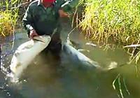 《垂钓对象鱼视频》 男子芦苇丛大草鱼双飞