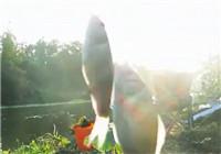 《垂钓对象鱼视频》 男子河边野钓鲫鱼双飞入护