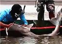 《水库钓鱼视频》 男子细竿擒获水库超级巨物