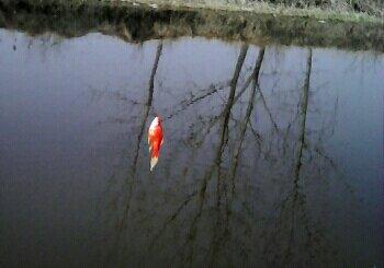 观赏鱼钓场