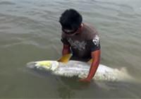 《水库钓鱼视频》 男子在水库成功钓获大鳡鱼