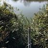 Nana丶渔者