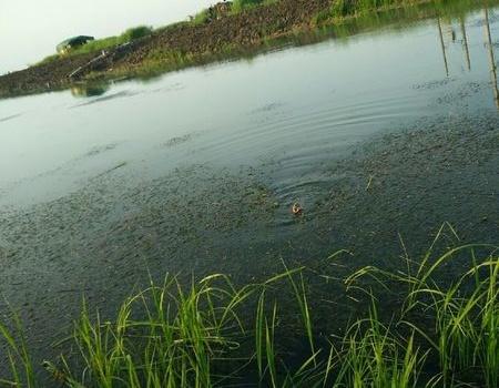 好久不发,随便搞搞。白马湖偶得小鲤鱼 红虫饵料钓翘嘴