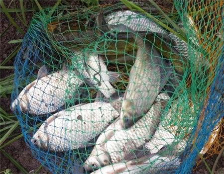 17.7斤鲢鳙被征服 自制饵料钓鲫鱼