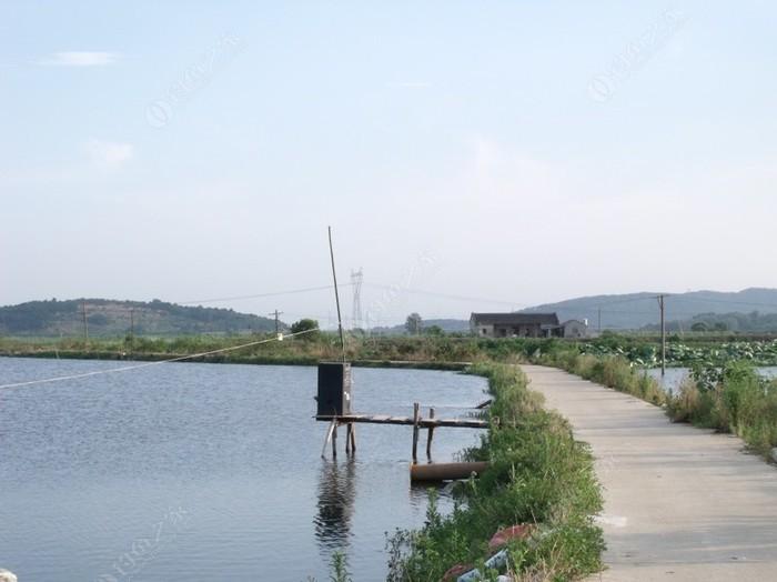蔡甸新成家庭农场