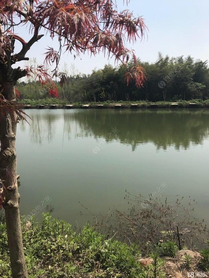 天然水库垂钓园