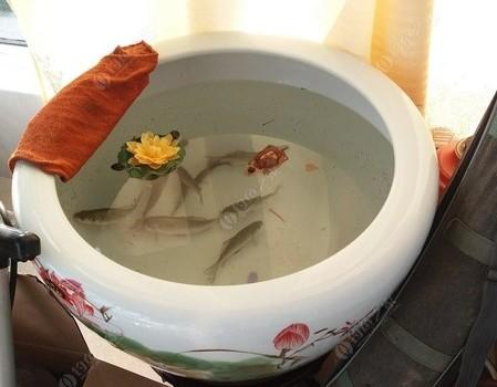 2019年10月13日周日泗河连杆小鲫鱼,连年有余!