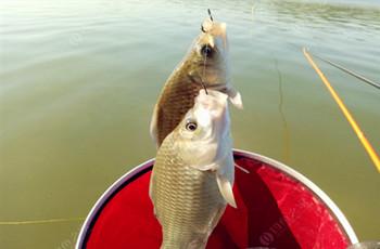 秋天釣大鯽魚的幾個絕招!