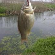 [技巧_打窝篇]春钓鲫深浅水如何打窝诱鱼好?分享传统钓经验。