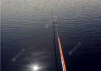 秋季釣板鯽技巧,學會不再怕沒魚!