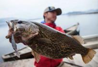 路亚鳜鱼常用饵以及它的习性!
