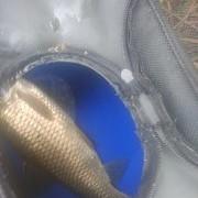 [技巧_夏初钓草鱼]春末夏初如何垂钓草鱼?浅谈几点经验。