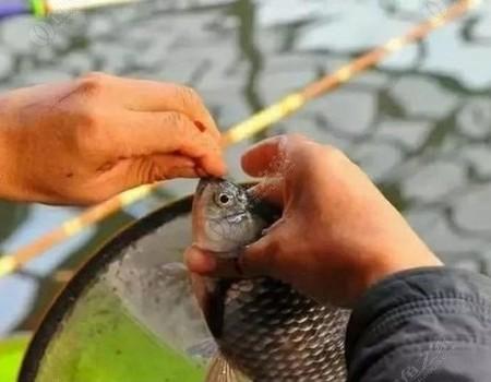"""民间最""""土""""的2种鲫鱼饵料,越冷效果越好,上的大多是大板鲫"""