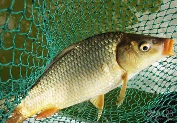 垂钓不同种类鱼种的调漂方法