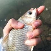 钓鱼从调漂开始,简单的调漂,从浮漂了解双钩水底状态