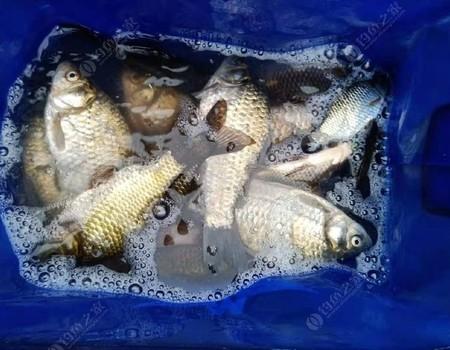 野塘探釣:大板鯽告竭,且釣且珍惜