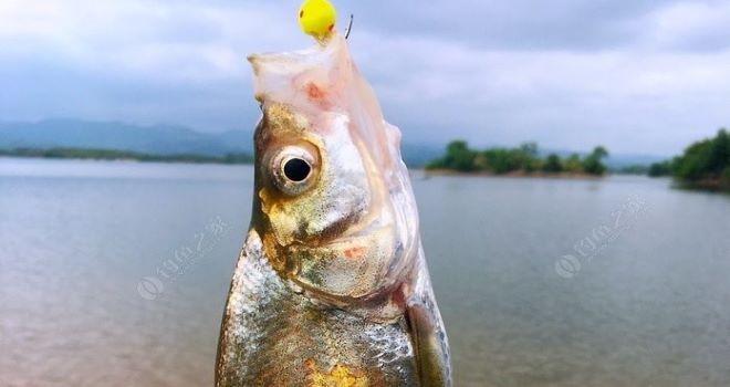 2021第九战 为了心中的那条大鱼