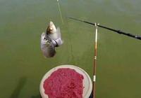 冬季作釣小技巧 從此幫你告別空軍!