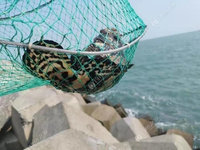 如意岛一日海钓