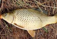野钓大鱼的关键技巧