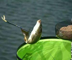 老釣友教你如何應對,鯽魚吃餌擋口的問題!