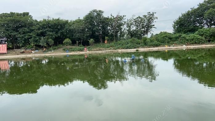 田园垂钓园大物池