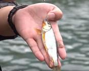 《游钓中国7》第十集 孤军奋战多玩法 特有鱼种入溪流