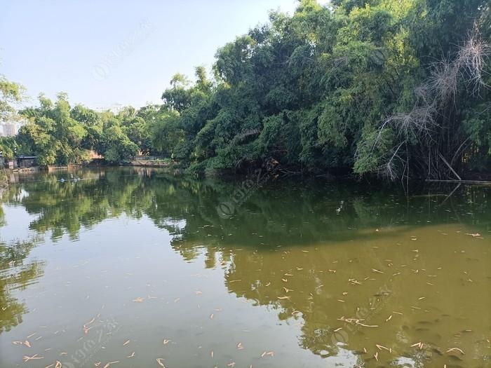 天鹅湖休闲钓鱼场
