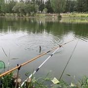 实践总结:走水严重小鱼闹窝钓鲫鱼的方法!