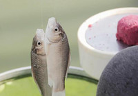 冬季鱼口差,这些技巧帮你一招搞定!