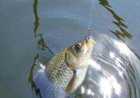 浮漂有信号却不上鱼,多半是这些原因造成的!