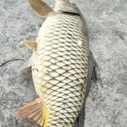 根据鱼的生活规律,观察鱼情选择钓点钓法