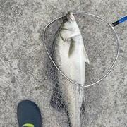 浅谈岸钓鲈鱼的一些搜索小技巧