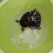 大鱼吃小鱼,乌龟吃大餐。