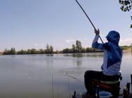 《白条游钓》 湖南草鱼脾气真急躁,一不留心,白条险些被拖下水