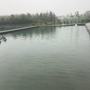 富发八卦湖钓鱼池