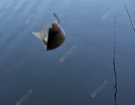 群魚薈萃魚目混雜,寒冬臘月還反季作亂!