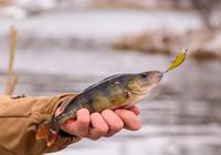 初到陌生水域如何判断是否有鱼?